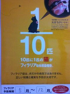 猫フィラリア.jpg